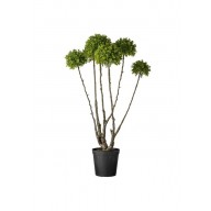 FLORA BOXWOOD LARGE